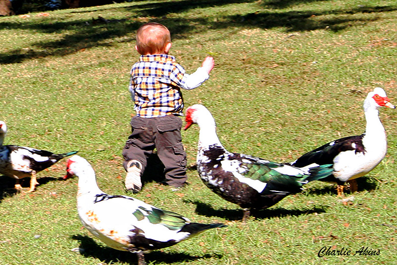 This kid had fun with the ducks.