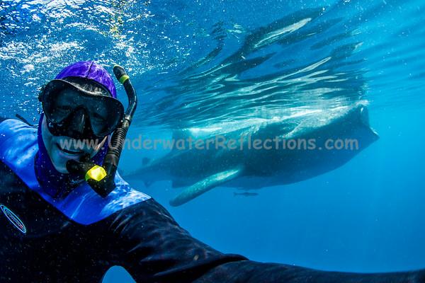 This selfie includes a FEEDING whale shark.