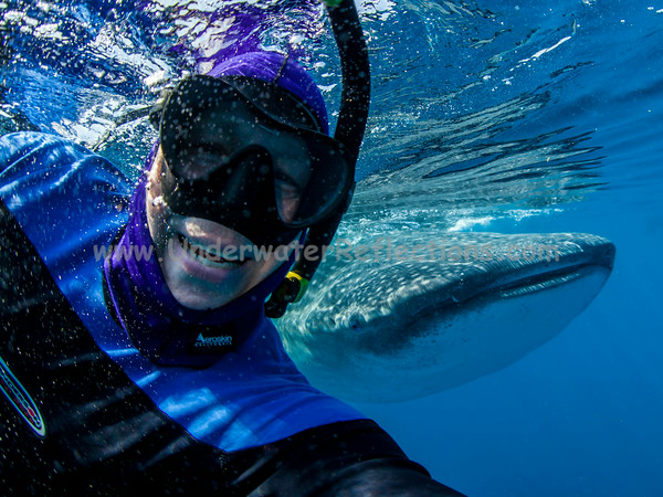 """My very first """"selfie"""", with a 30-foot whale shark peering over my shoulder.  This was taken on our third morning of snorkeling, when we arrived at the congregating area to find literally dozens of whale sharks - and dozens of mantas to boot!  After shooting photos as fast as my camera could do so for half an hour, I decided to try to do this while they were so plentiful (which only turned out to be another 15 minutes or so)."""