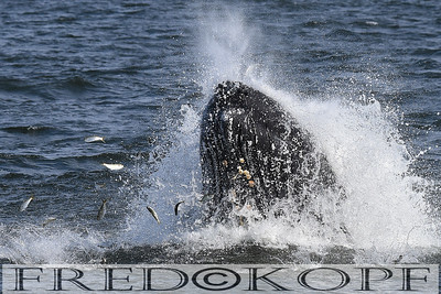 Whale Watching August 27th, 2017