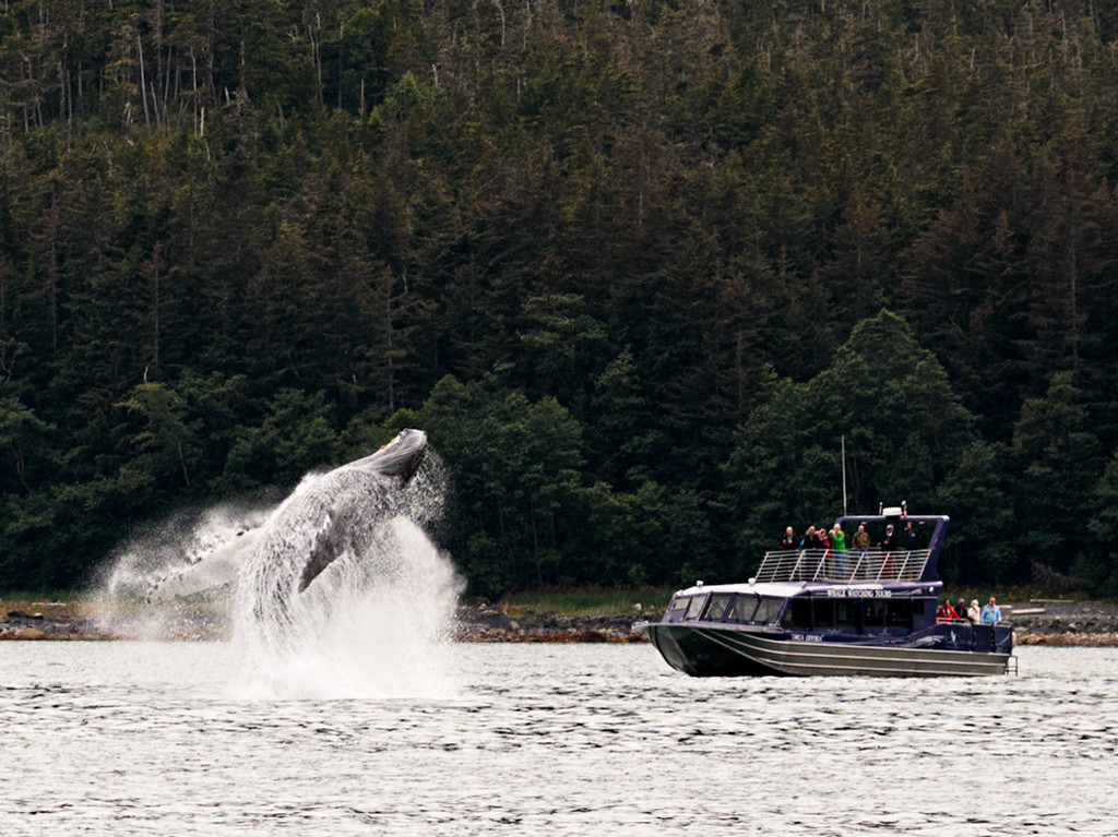 Whale Breach and Boat