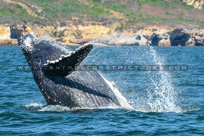 whale-watching-7082