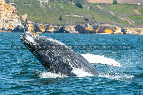 whale-watching-7071