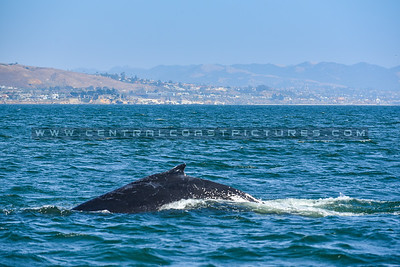 whale-watching-7062