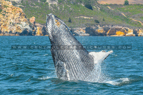 whale watching-7069