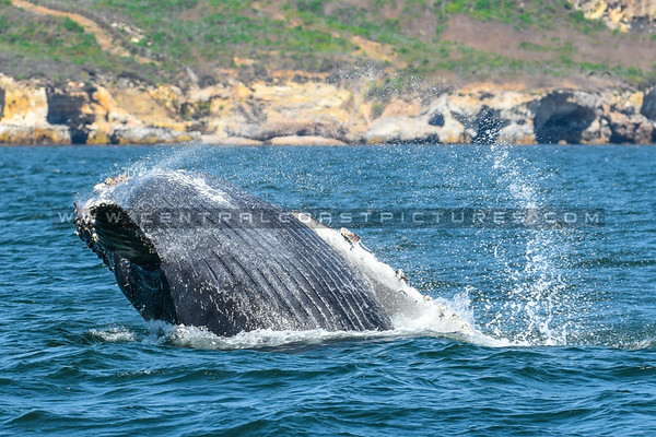 whale-watching-7083