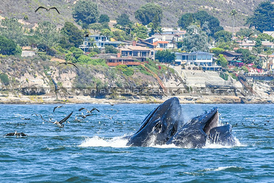 whale watching-6883