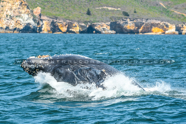 whale watching-7072