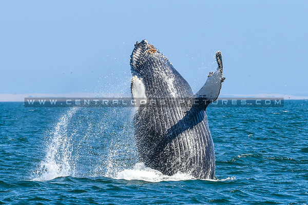 whale watching-7043