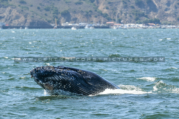 whale watching-6980
