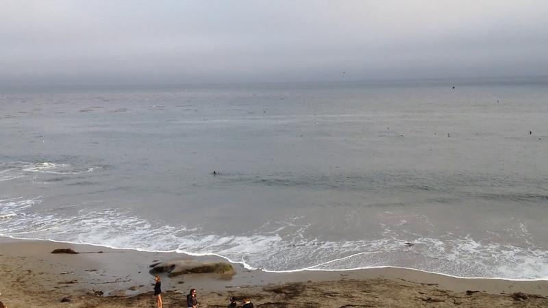 Whale feeding at Santa Cruz