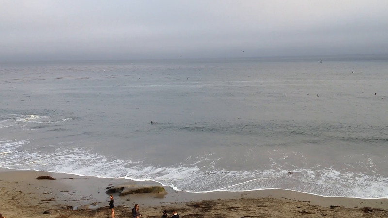 Whale feeding at Santa Cruz