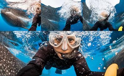International Whale Shark Day - celebrate these beautiful gentle giants.