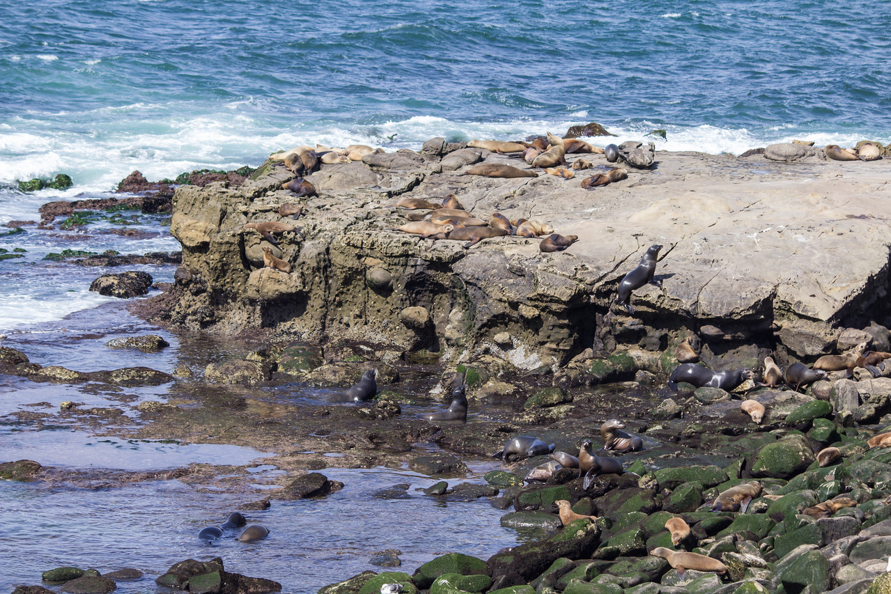 Sea lions haul out at Boomer Beach.
