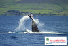"<a title=""Make a reservation for Spirit of Lahaina, Lahaina Whale Watch Eco Adventure Cruise with Tom Barefoot's Tours"" href=""http://www.tombarefootshawaiitoursactivities.com/product.php?id=2522&name=Whale_Watch_Eco_Tour"">Spirit of Lahaina, Lahaina Whale Watch Eco Adventure Cruise</a>"