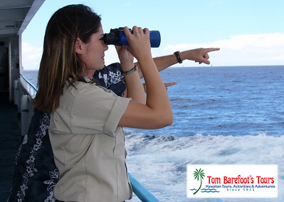 Whale Watching Tours on Oahu