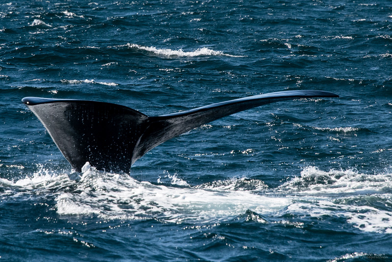 And at Hermanus...whale mission accomplished.