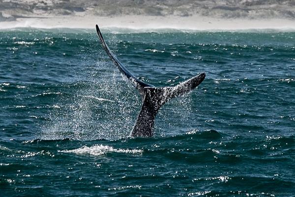 Like whale...