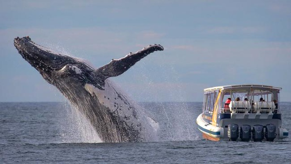 Whales Watching