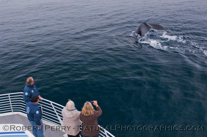 Megaptera novaeangliae passengers naturalists CINC 2012-02-25 SB Channel-a-065