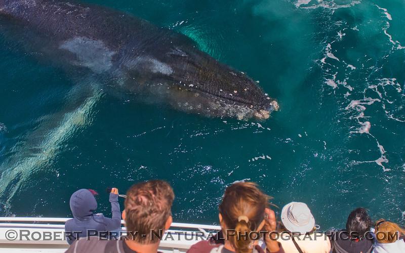 1-Megaptera novaeangliae & passengers 2011 08-02 SB Channel a - 071