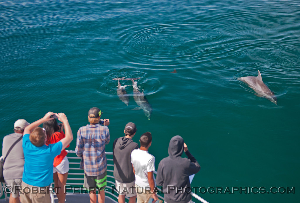 Tursiops truncatus & students 2014 05-01 SB Coast-MHS-a-031
