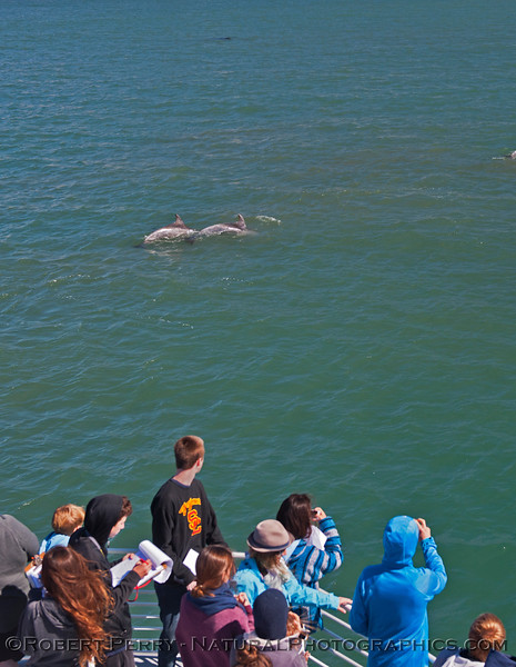 Tursiops truncatus & students 2014 04-28 SB Coast-MHS-a-002