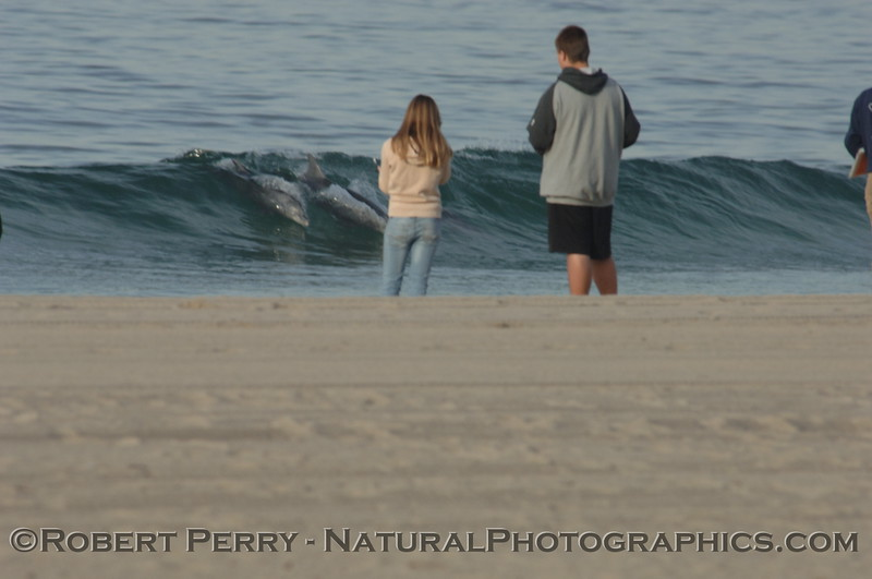 Two biology students from Malibu High observe surfing Bottlenose Dolphins at Zuma Beach.