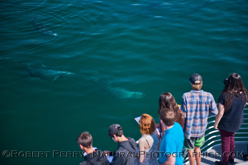 Tursiops truncatus & students 2014 05-01 SB Coast-MHS-a-113