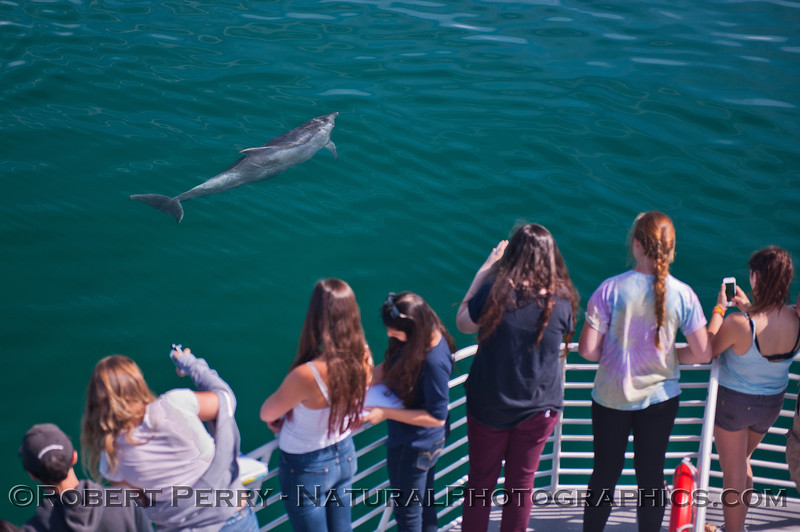 Tursiops truncatus & students 2014 05-01 SB Coast-MHS-a-044