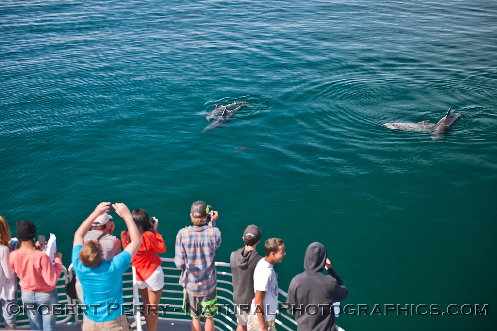 Tursiops truncatus & students 2014 05-01 SB Coast-MHS-a-022