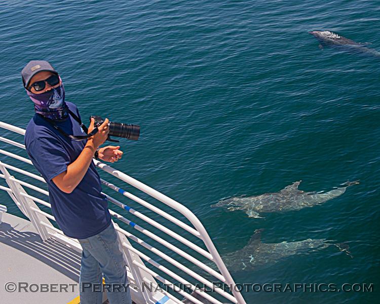 Tursiops truncatus offshore & Adam Ernster 2020 06-15 SB Channel-d-024
