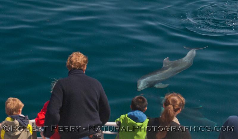 Tursiops truncatus & passengers 2012 04-09 SB Channel-a-032