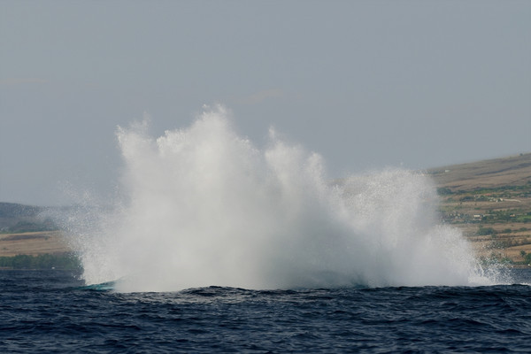 splashdown after humpback whale breach (9 in sequence of 9), Megaptera novaeangliae, in Maui, Hawaii , Central Pacific Ocean