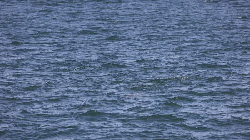 Jersey Shore Whale Watch June 16th photos-1097