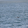 Jersey Shore Whale Watch June 16th photos-1081