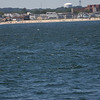 Jersey Shore Whale Watch June 16th photos-1087
