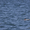 Jersey Shore Whale Watch June 16th photos-1220
