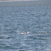 Jersey Shore Whale Watch June 16th photos-3