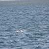 Jersey Shore Whale Watch June 16th photos-1079