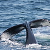 Whale Tail Photo