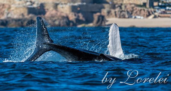 Whale Salute
