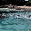 Dolphins Chasing & Playing