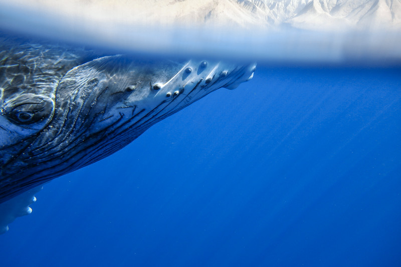 Whale over under