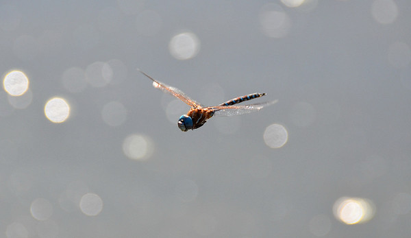DRAGON FLY FLIGHT