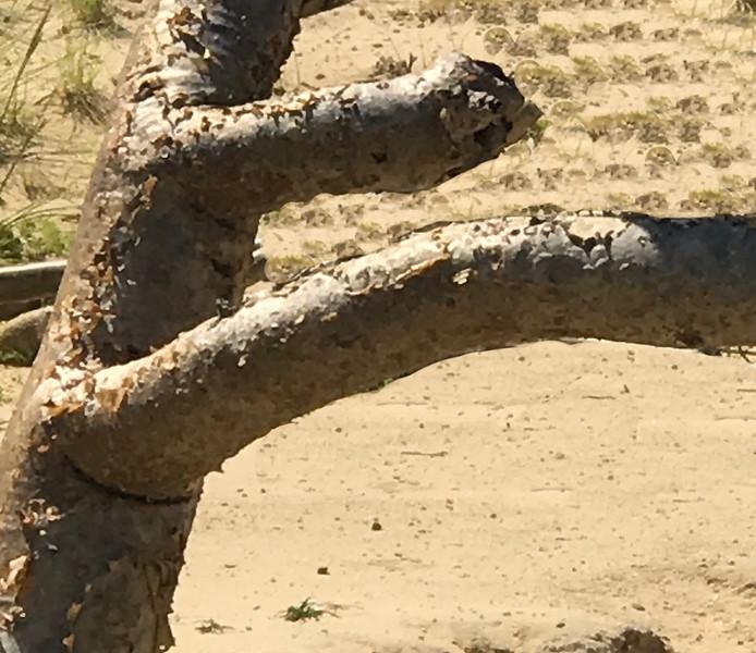 Tree as kicker- Cabo San Lucas