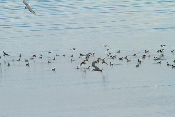Birds - Large Gatherings