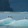 le Conte Glacier, Alaska