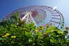 Ferriswheel in Lantana