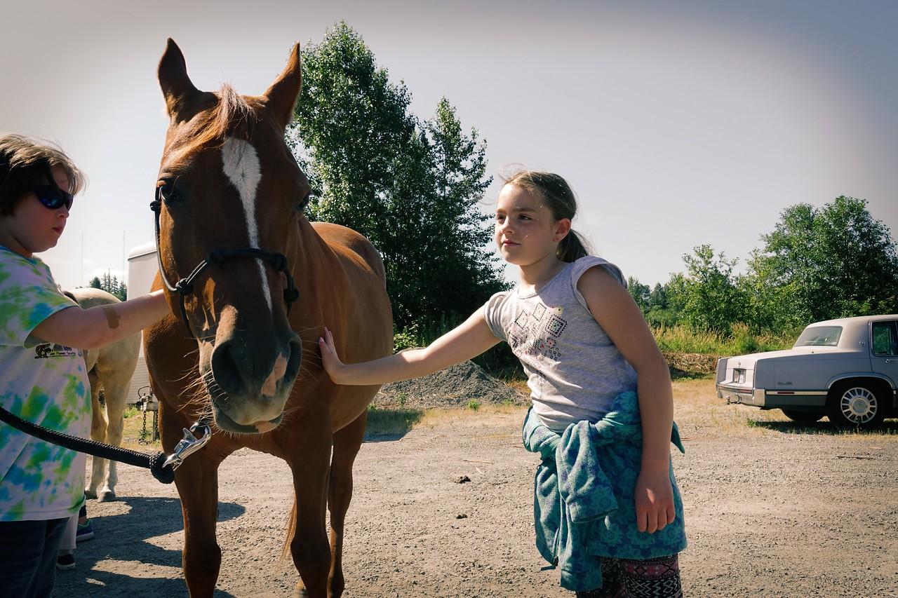 Horses 109